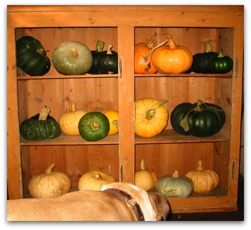 2009_10_06_blog_pumpkin_shelf