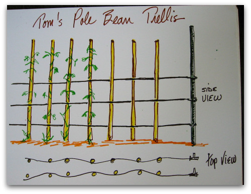 drawing of pole bean trellis