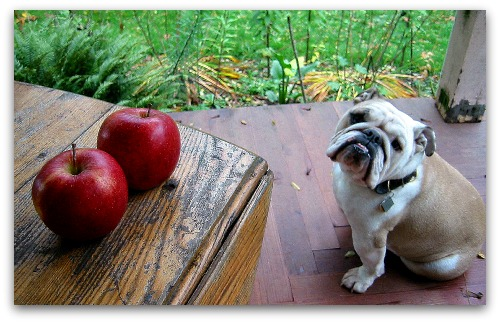 Boz and the table of apples