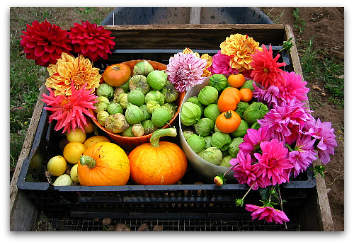 wheelbarrow full of vegetables and flowers