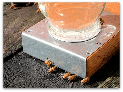 closeup of honeybees