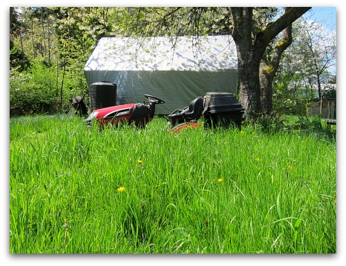 craftsman lawnmower sitting in tall grass