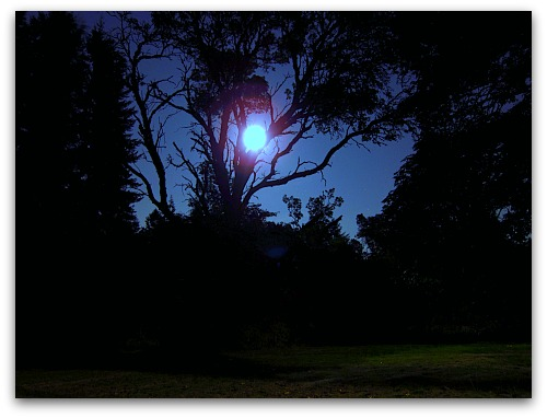 full moon through the madrona trees