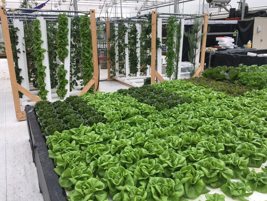 Greenhouseconsumables Hydroponic