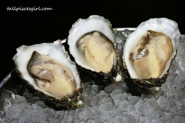 Irish oysters! They're huge and super fresh!