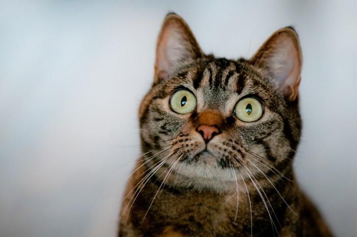 Verschrikte kat