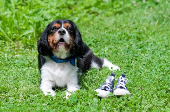 Zwangerschapsfotografie hondje schoentjes