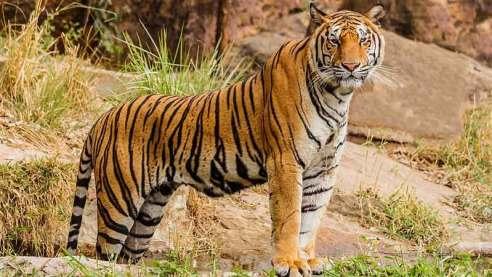 Kalakad Mundanthurai Tiger Reserve - Tamilnadu Wildlife - Tamilnadu Tourism  Travels