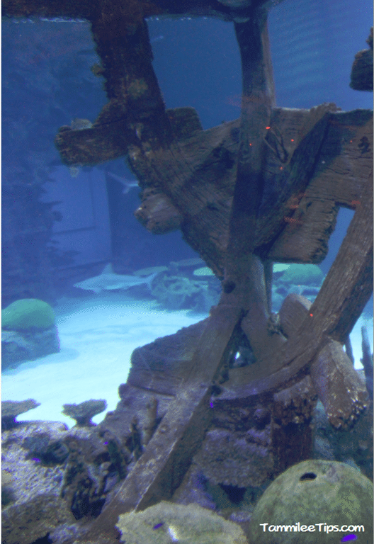 Mandalay-Bay-Shark-Exhibit-Ship-Wreck.png