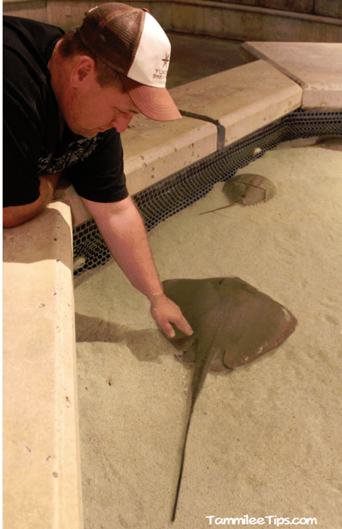 Mandalay-Bay-Shark-Exhibit-Sting-ray-tank.png