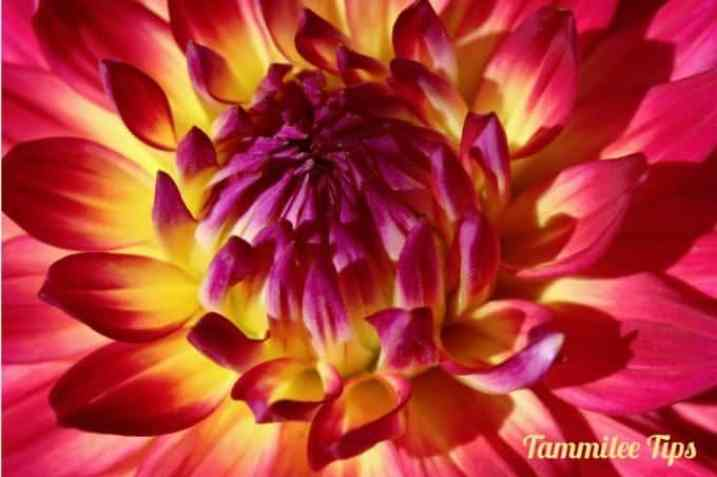Manito-Flowers-1-labeled-2.jpg