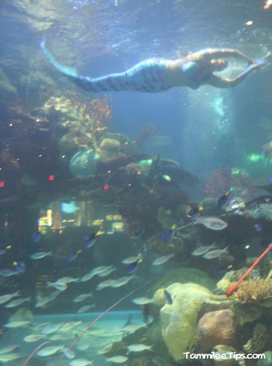 Tanked-Aquarium-Silverton-Casino-Mermaid.png