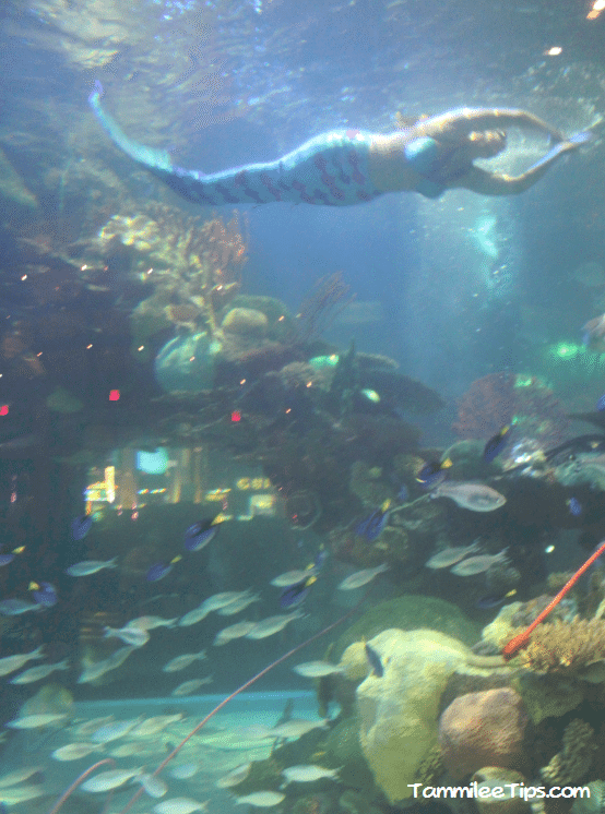 Tanked-Aquarium-Silverton-Casino-Mermaid.png