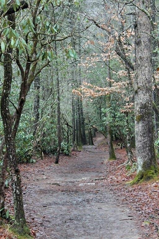 hiking-trail.jpg