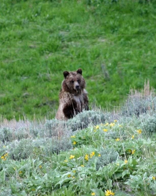 Bear-sitting-up.jpg