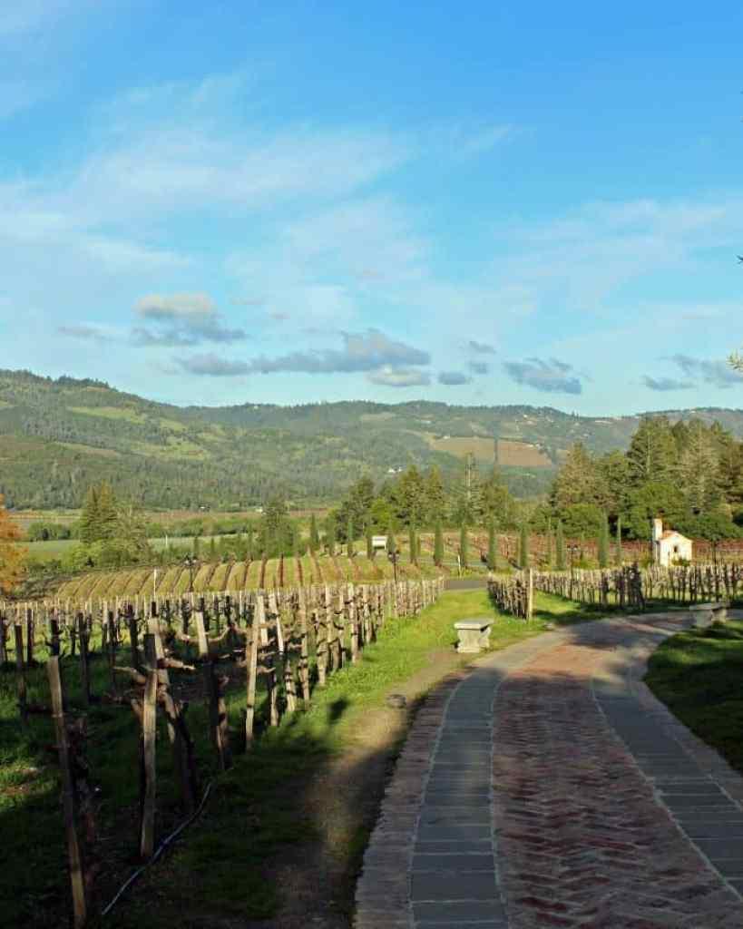 vineyard outside Castle Winery
