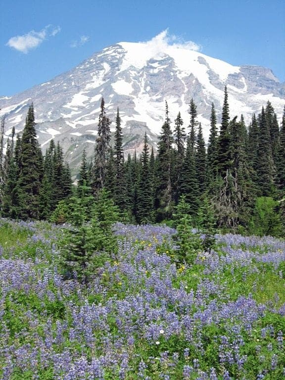 Mount Rainier National Park Travel Tips
