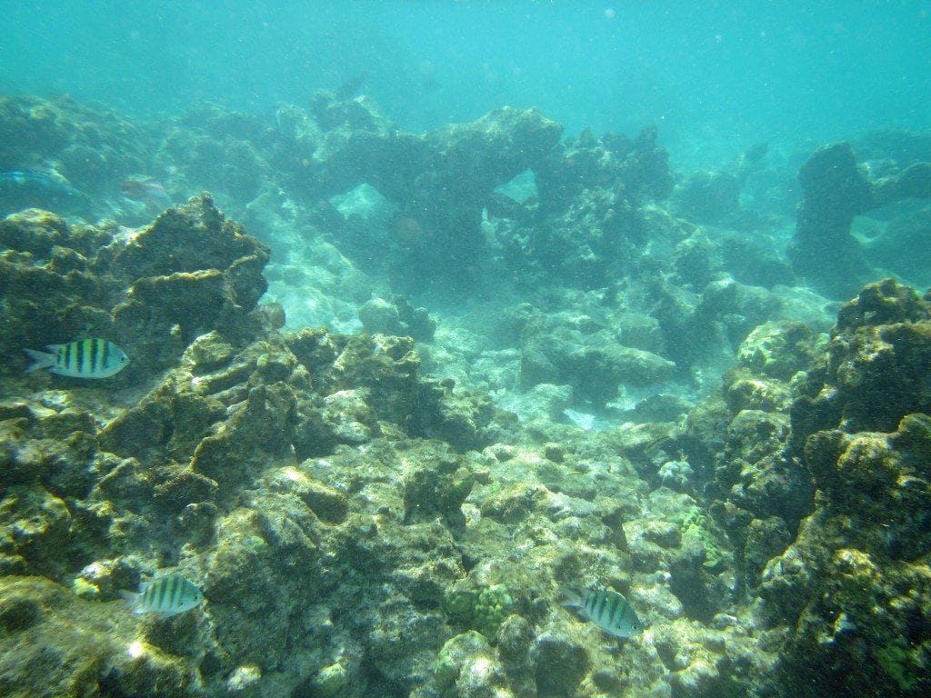 fish and coral  snorkeling in Aruba