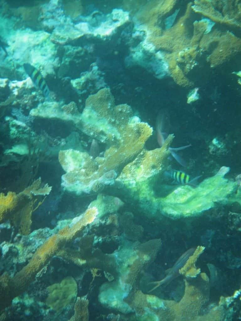 fish inside coral Belize