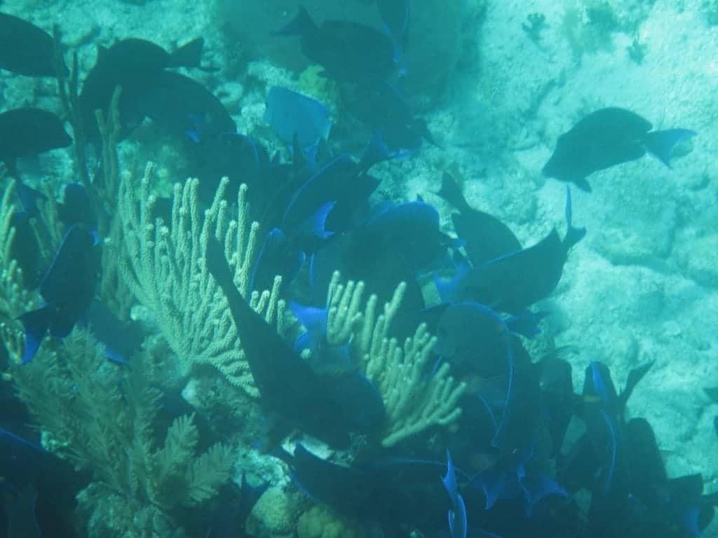 school of fish belize