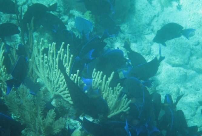 Snorkeling Belize's world famous barrier reef