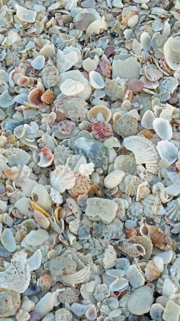 Blog Shells at Sanibel Island Florida