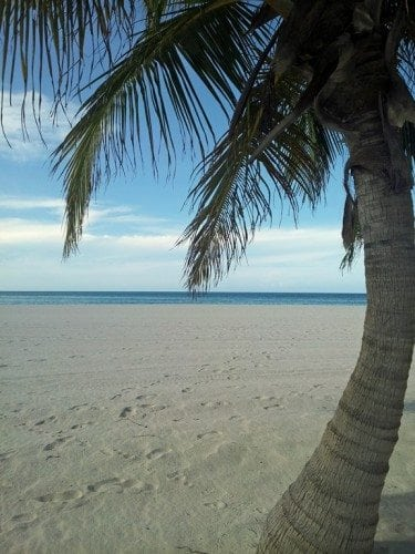 Palm-tree-in-the-sand-passion-island.jpg