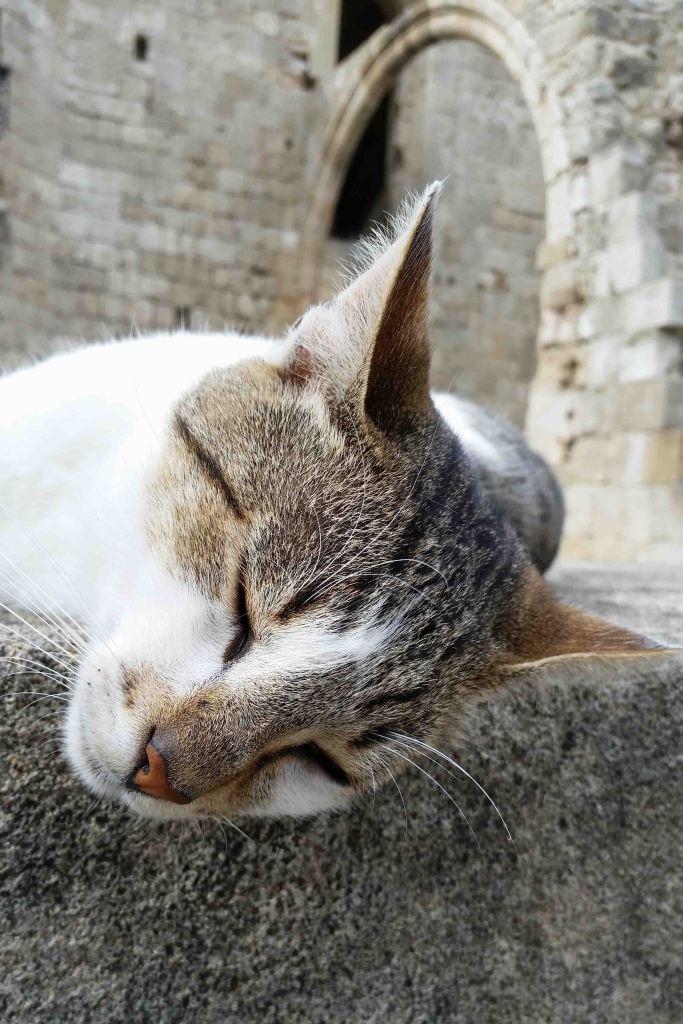 Blog sleeping cat
