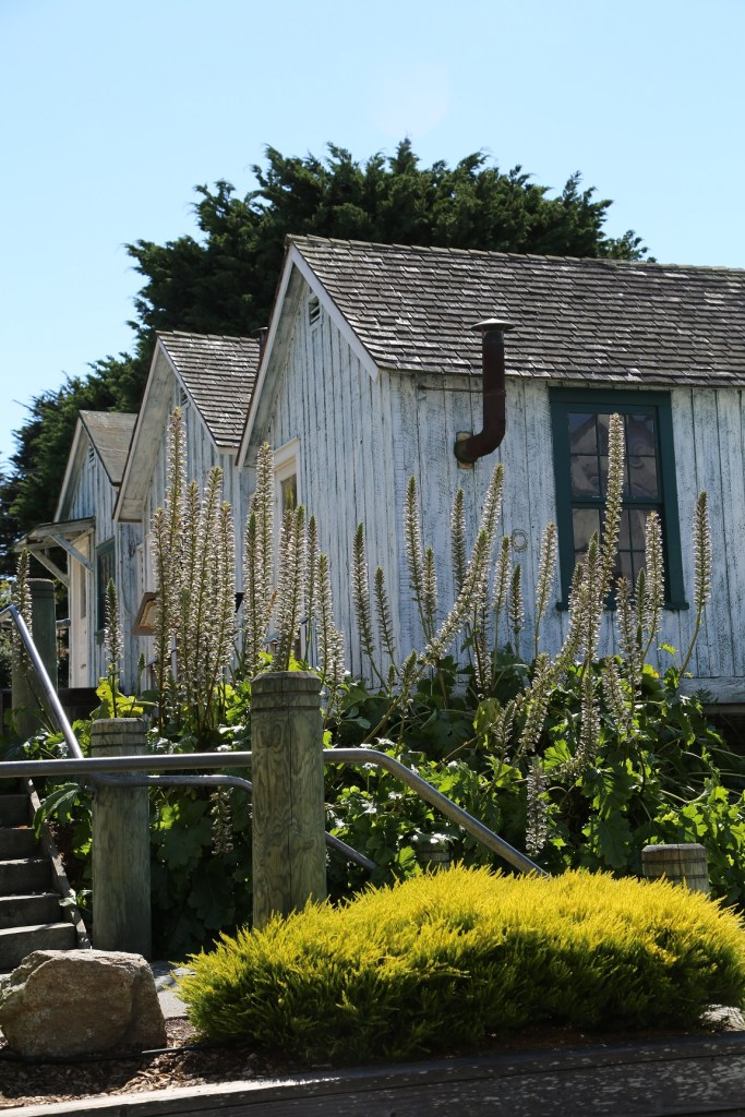 Cannery Row History