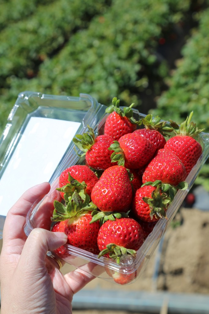 Farm picked strawberries