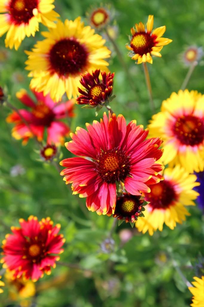 Beautiful flowers at Kingsbrae Gardens