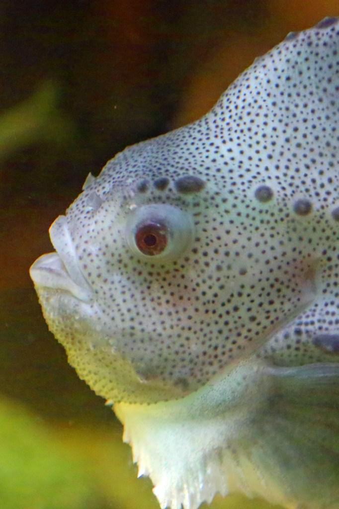 Fish at the Fundy Aquarium