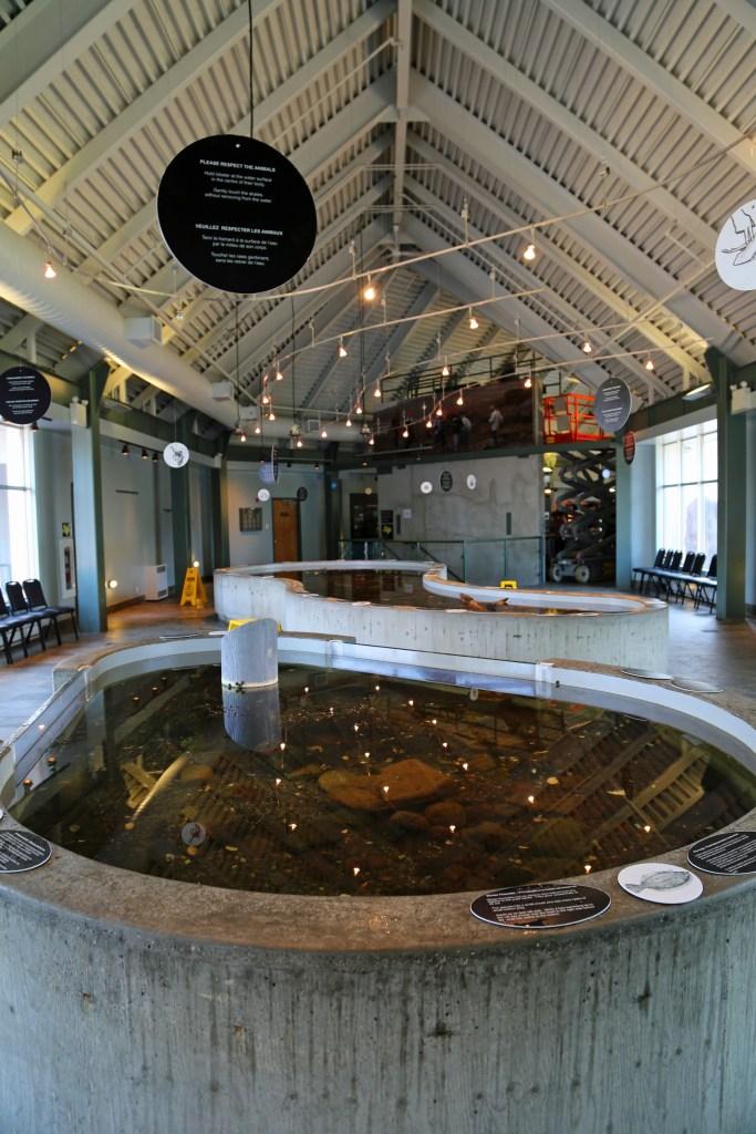 Touchtanks at the Fundy Aquarium