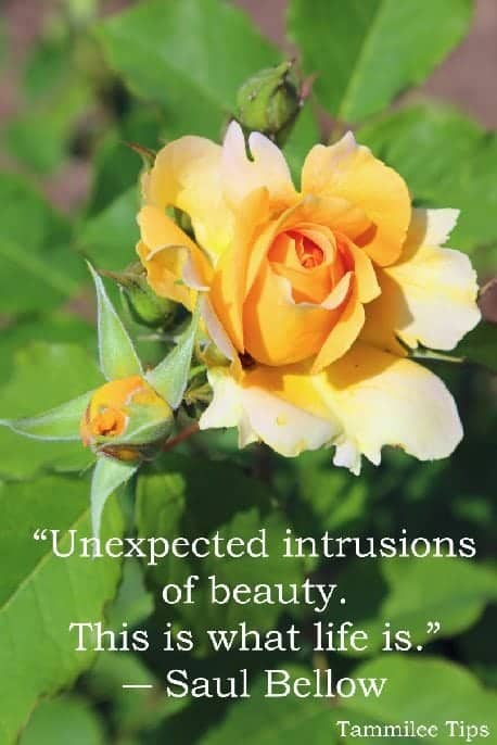 """Unexpected intrusions of beauty. This is what life is."""