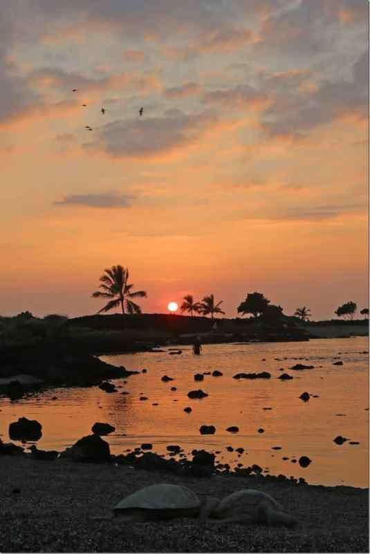 Sunset at Kaloko Honokohau with green sea turtles