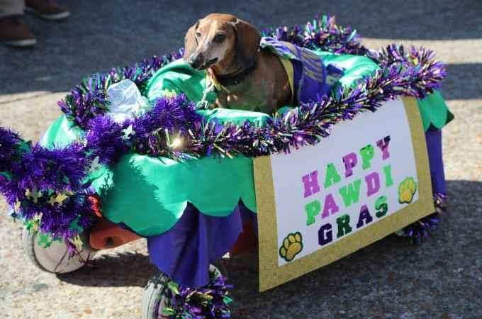 2017 Krewe of Barkus Parade in Lake Charles, Louisiana