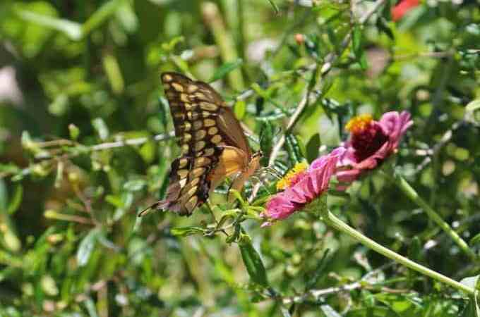 An afternoon at the Vallarta Botanical Gardens