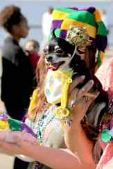 Krewe of Barkus Lake Charles