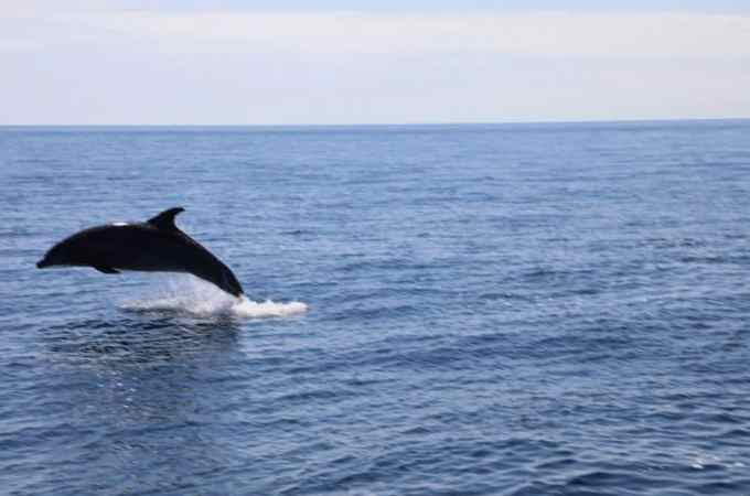 Dolphin Excursion Catalina Island with Carnival Cruise line