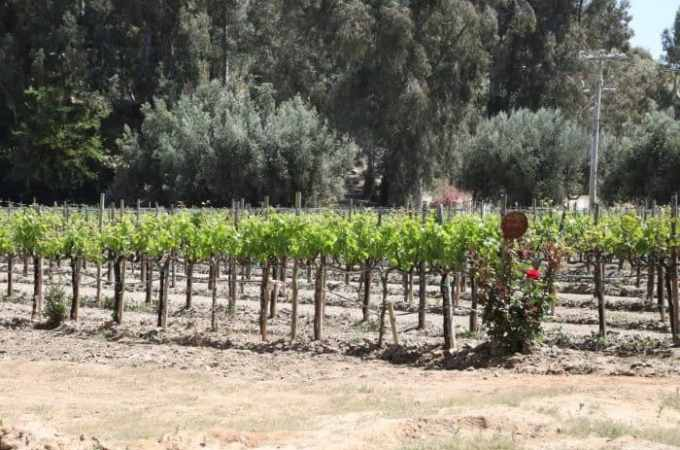 Exploring Mexican Wines on a Ensenada Wine Tour