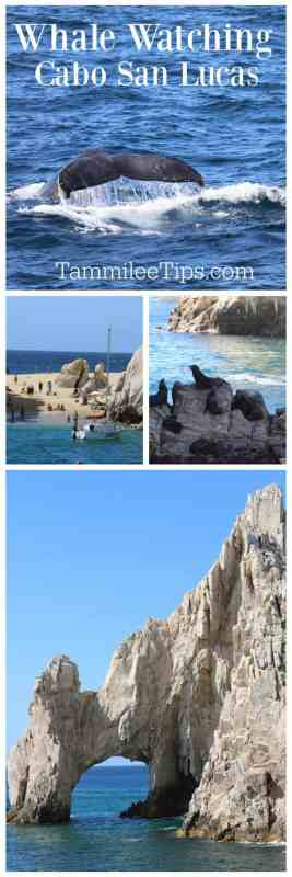 One of the top things to do in Cabo San Lucas Mexico is Whale Watching. Find out what you need to know and what this great day trip is like.