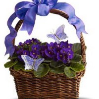 Violets & Butterflies from Tammys Floral