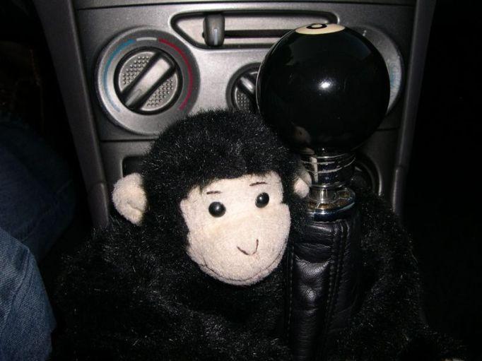 aguila-monkey