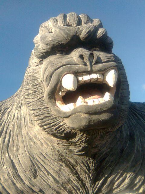 sallys-gorilla