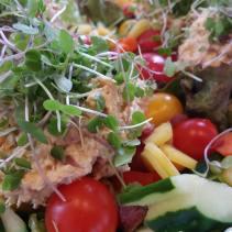 Green Salad with Coho Salmon