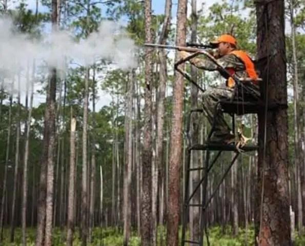 Florida Deer Hunting FWC Logging Deer