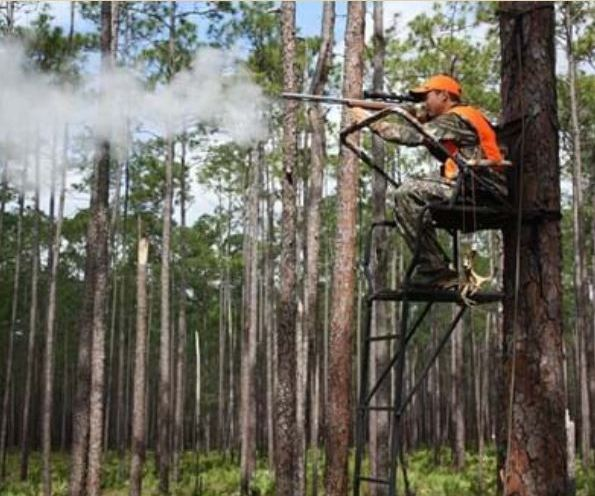 Florida Deer Hunting FWC Logging Deer