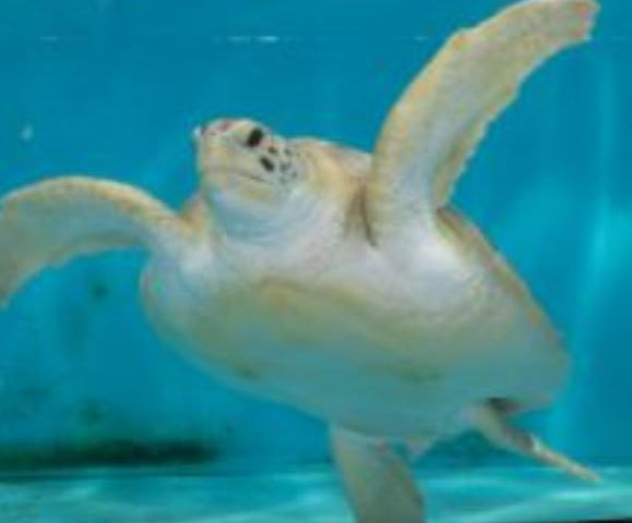 Tampa Sea Turtle Has a New Home