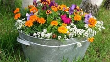 garden flowers Pasco county Hillsborough Polk