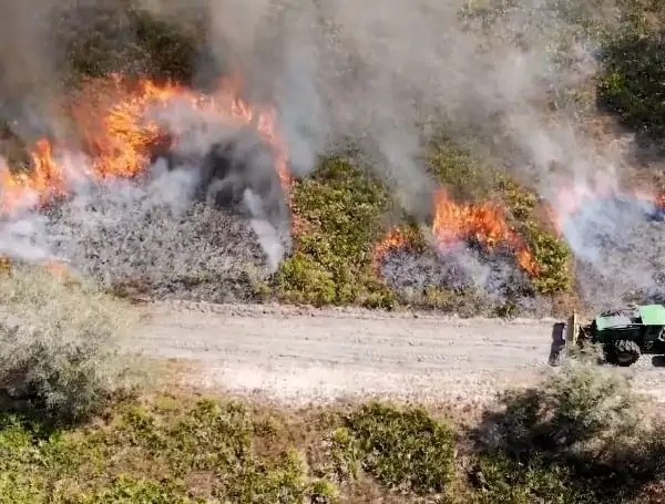 Some major benefits of prescribed fire include: • Reducing overgrown plants, which decreases the risk of catastrophic wildfires. • Promoting the growth of new, diverse plants. • Maintaining the character and condition of wildlife habitat. • Maintaining access for public recreation.